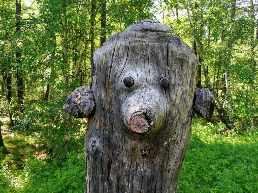 """На """"Колиной поляне"""" множество причудливых фигур из дерева"""